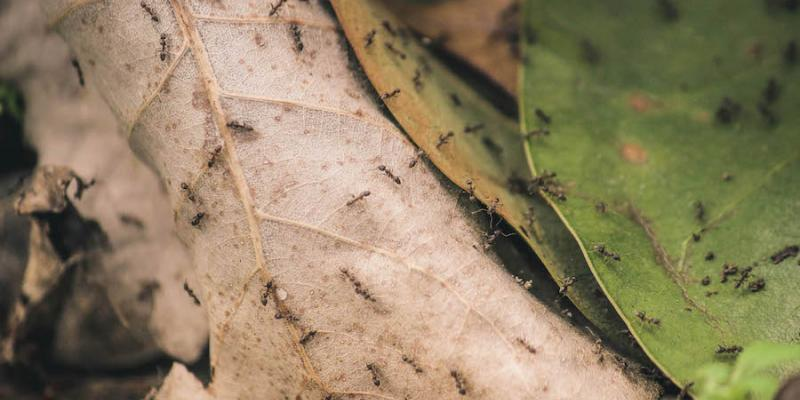 Ants crawling on leaves